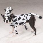 """""""Cow Dog"""""""