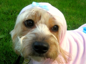 Eco-Pup Doggie Model wearing the Charm Hoodie