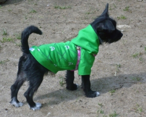 Park Hoodie by Eco-Pup Dog Clothing