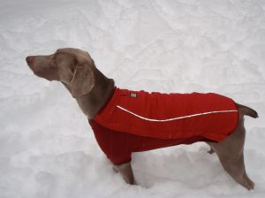 Buddy poses in his CloudChaser jacket!