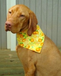Citrus Dog Scarf by caninedesigns