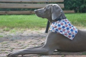 Country Stars Dog Scarf by caninedesign