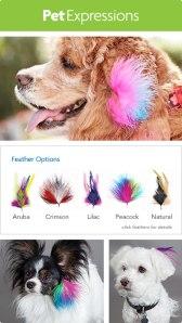 img-feathering-options-b