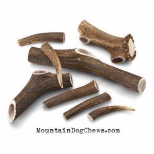9_GROUP_elkantler_chew_group_web__96502_1405448122_320_320